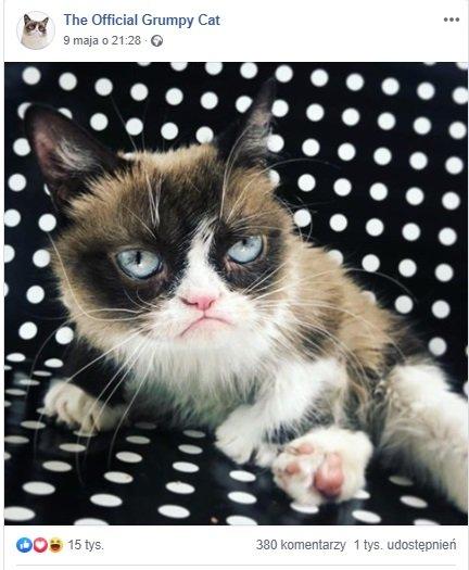 Grumpy Cat nie żyje, Grumpy Cat memy, Grumpy Cat rasa, Facebook