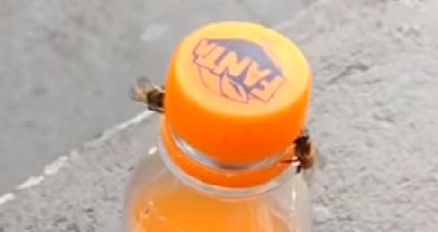 Pszczoły otworzyły butelkę Fanty. Zastanawiacie się jak to zrobiły? Dokładnie tak samo jak my, po prostu trzeba zobaczyć to nagranie.