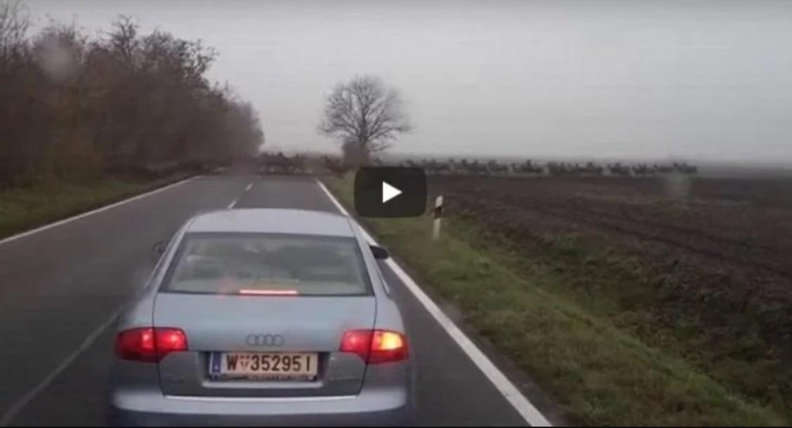 Niewiarygodnie duże stado jeleni przebiegło tuż przed maską samochodu. To nagranie kierowcy z Węgier daje do myślenia.
