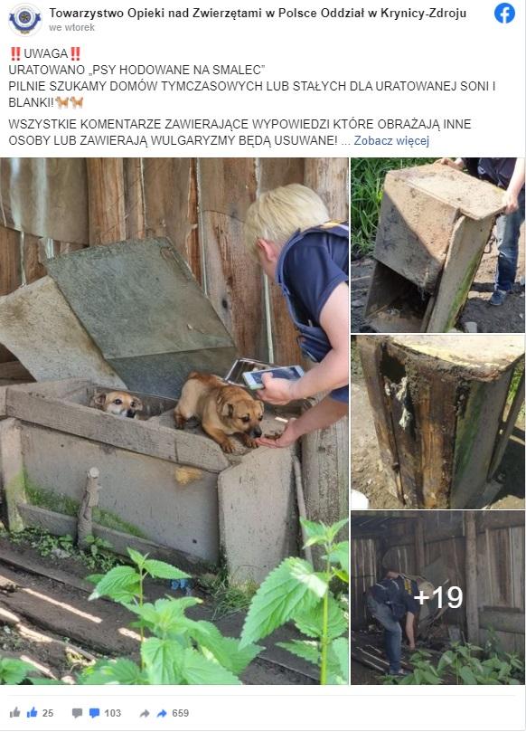 w niektórych zakątkach Polski wciąż istnieje makabryczny proceder, który zdawałby się już dawno nie istnieć. W tej wsi robiono smalec z psów.
