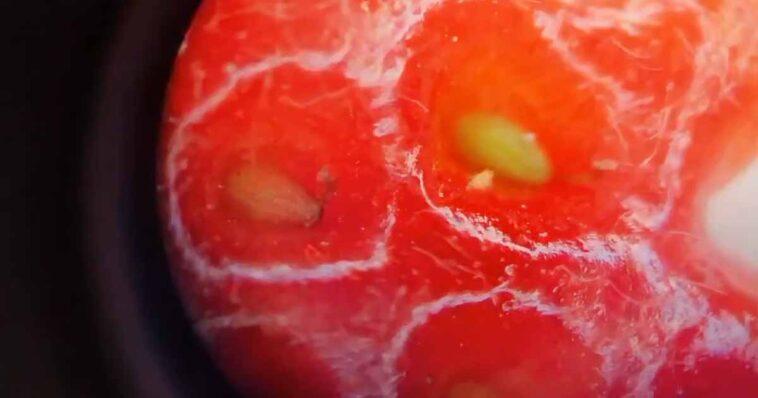 P:ewna TikTokerka postanowiła pokazać co zawierają truskawki, w ty celu umieściła je pod mikroskopem. Film robi furorę w sieci